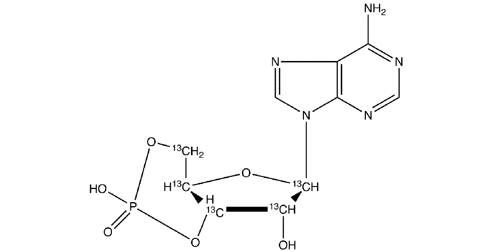 Внутриклеточные гормоны — циклический АМФ (цАМФ)