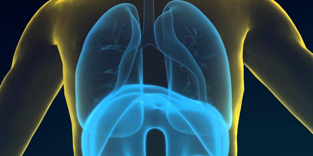Непрямое окисление глюкозы — дыхание