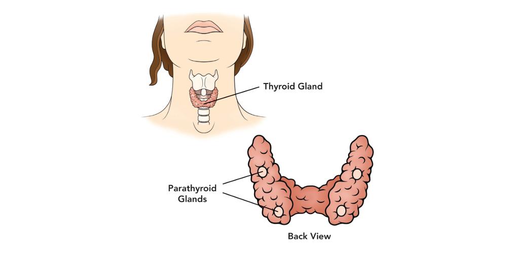 Паратиреоидный гормон (ПТГ)