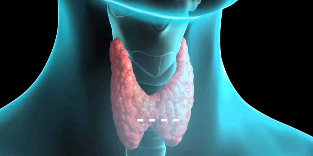 Влияние эпифиза на щитовидную железу и гормон роста