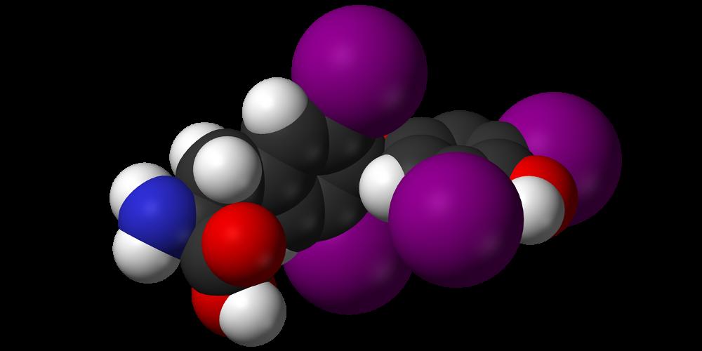 Гормоны периферических эндокринных желез — тироксин и трийодтиронин
