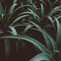 pexels-photo-1549194